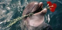 Дельфинарий Анапы